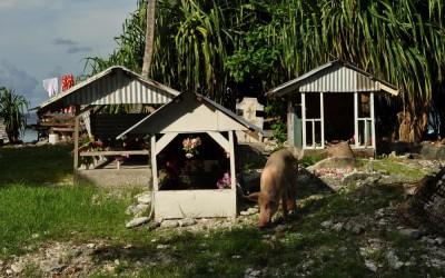 Cemetery (and visitor), Fongafale Island, Funafuti Atoll, Tuvalu