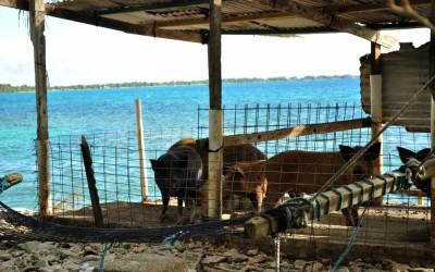 Pig sty with lagoon views, Funafuti Atoll, Tuvalu