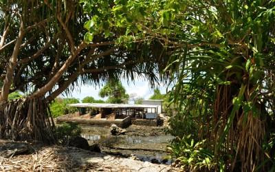 Pig pen, western Fongafale Island, Tuvalu
