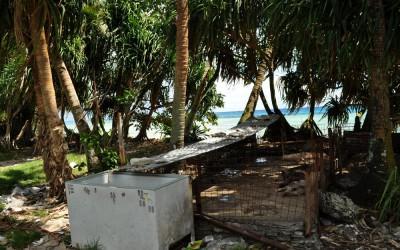 Pig pen near the road, Fongafale, Tuvalu