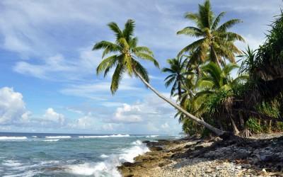 Palm tree stands sentinel to the Pacific Ocean, Funafuti Atoll, Tuvalu
