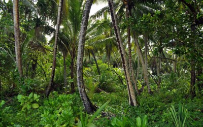 Jungle on Funafala Island, Tuvalu
