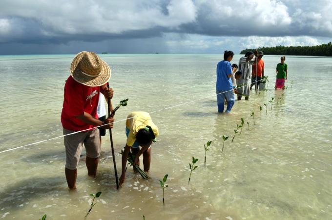 Tuvalu mangroves on Synthesis Report cover