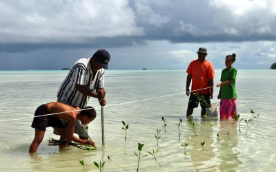 Planting mangroves on Funafala Island (climate change adaptation project), Tuvalu