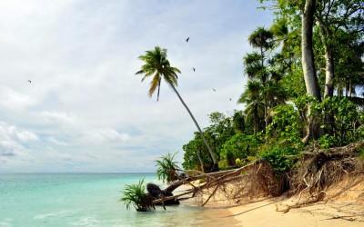 Signs of coastal erosion, Tepuka Island, Funafuti Atoll, Tuvalu
